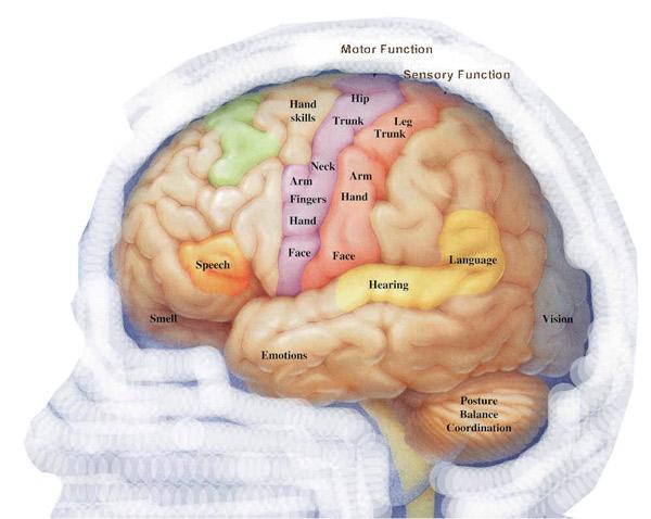 epilepsia11