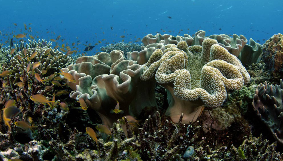 imagenes-fondos-marinos-coral
