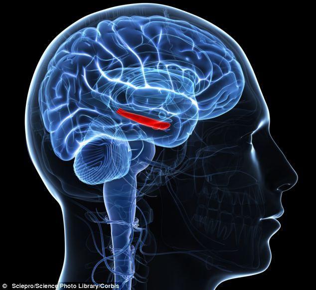 Resultat d'imatges de cortex prefrontal y la amigdala