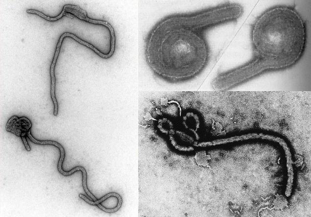 em_ebola