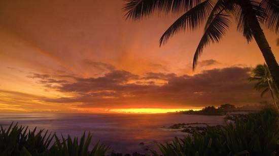 noche-tropical
